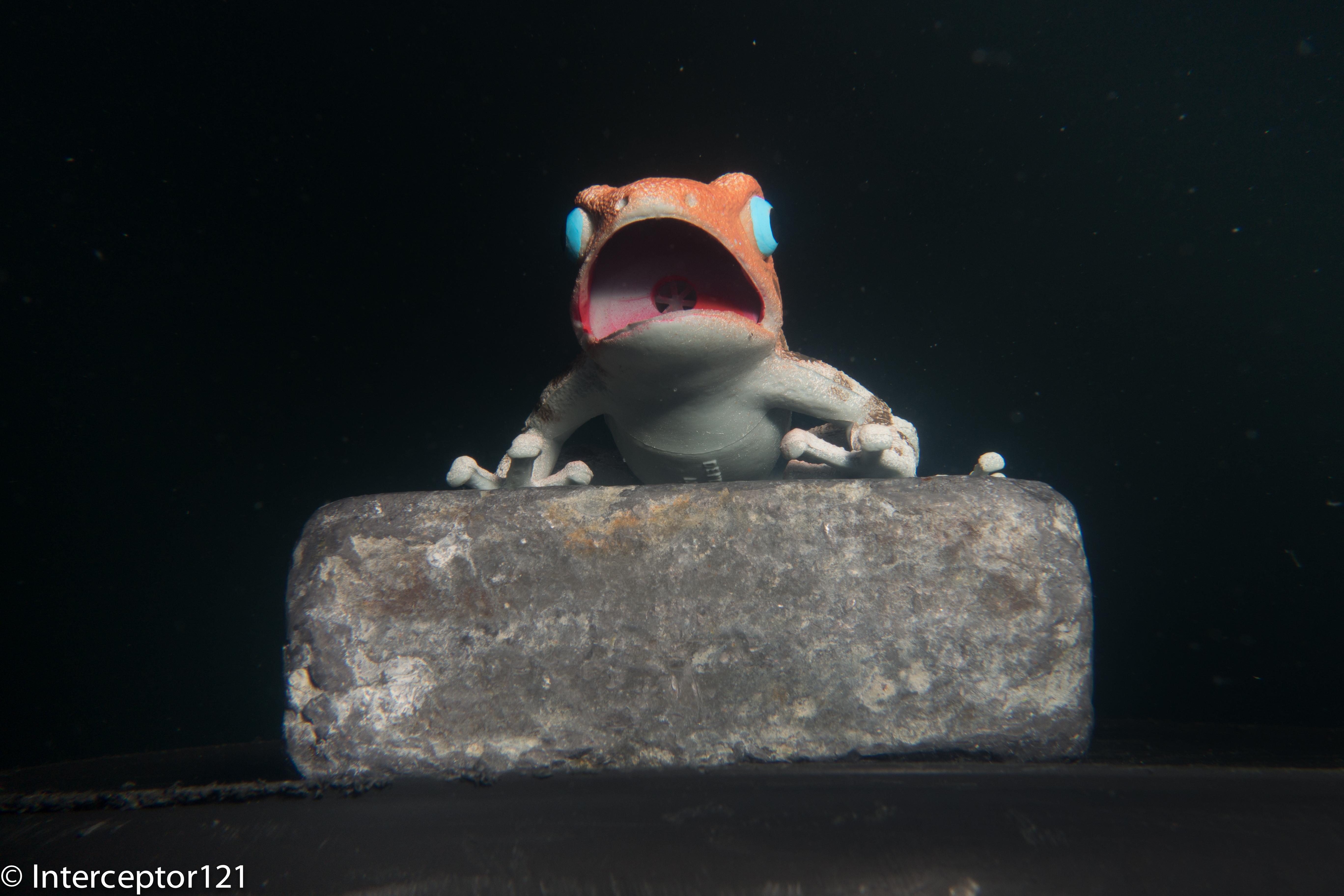 Frog at 28mm