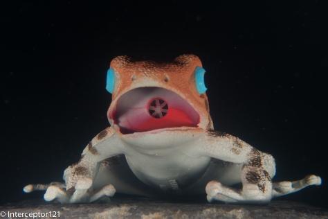 Frog at 50mm
