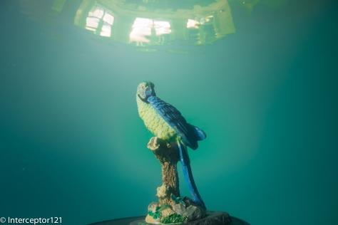 Falcon Fisheye