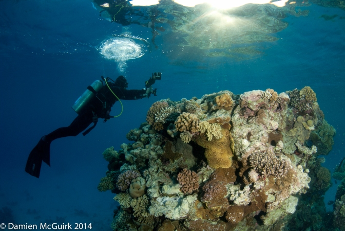 Underwater Photography Workshops – My Tips