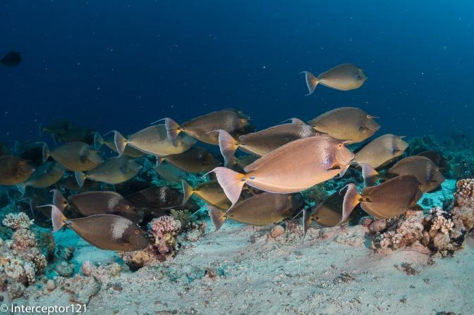 Red Sea Workshop with Alex Mustard – Part IV Shark Reef