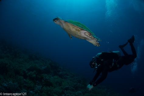 Turtle and Dive Guide